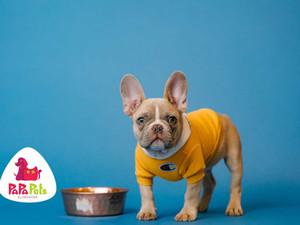 Aprenda como higienizar os potes do seu pet