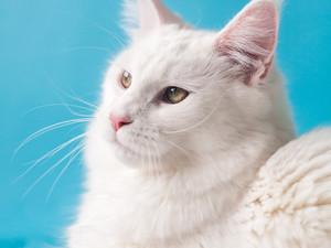 Medicina felina: Como manter o gato seguro e ativo dentro de casa.