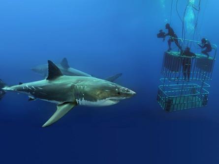 Shark Divers - Starts November 06 - on DoxNM