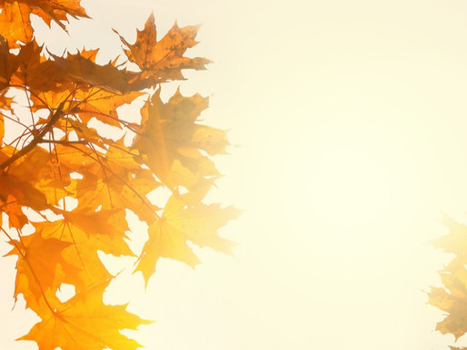 Autumn Greetings Newsletter