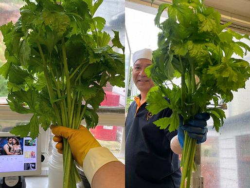 Homegrown Organic Thai Celery
