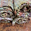 Thumbnail: Spring Garden placemats (set of 4)