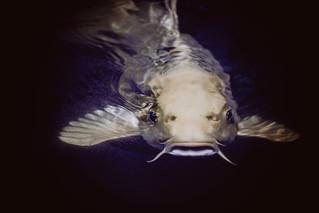 God Speaks Through Catfish