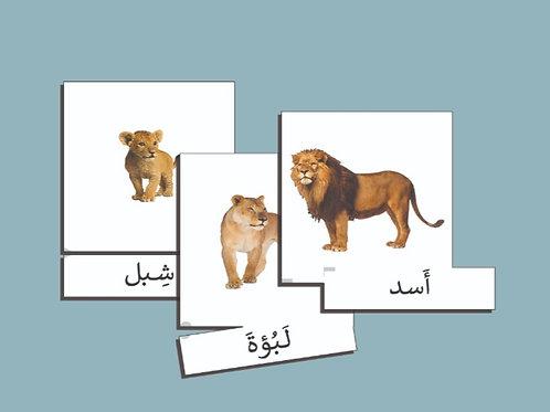 بطاقات عائلات الحيوانات