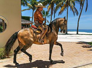caballobailadorparaiso.jpg