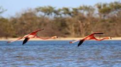Tour a La Guajira; Camarones