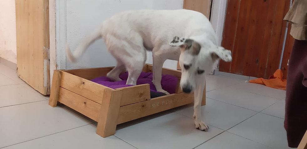 מיטה לכלבים + מזרון - קיט בנייה