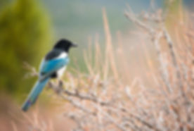 Black, white, and blue bird sitting on a branch in nature