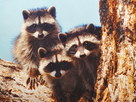 Take a Walk on the Wild Side… Fun Facts About Local Feathered & Furry Fauna