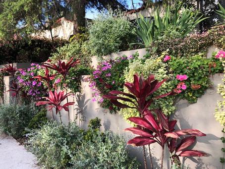 Grateful for Gardens