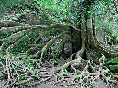 NOURISH YOUR ROOTS