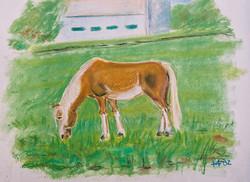 Haflinger Pferd .jpg