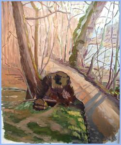 Aarau Baumstrunk in der Wöschnau