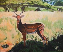Springbock SA.