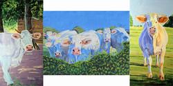 Triptychon Charolais Kühe