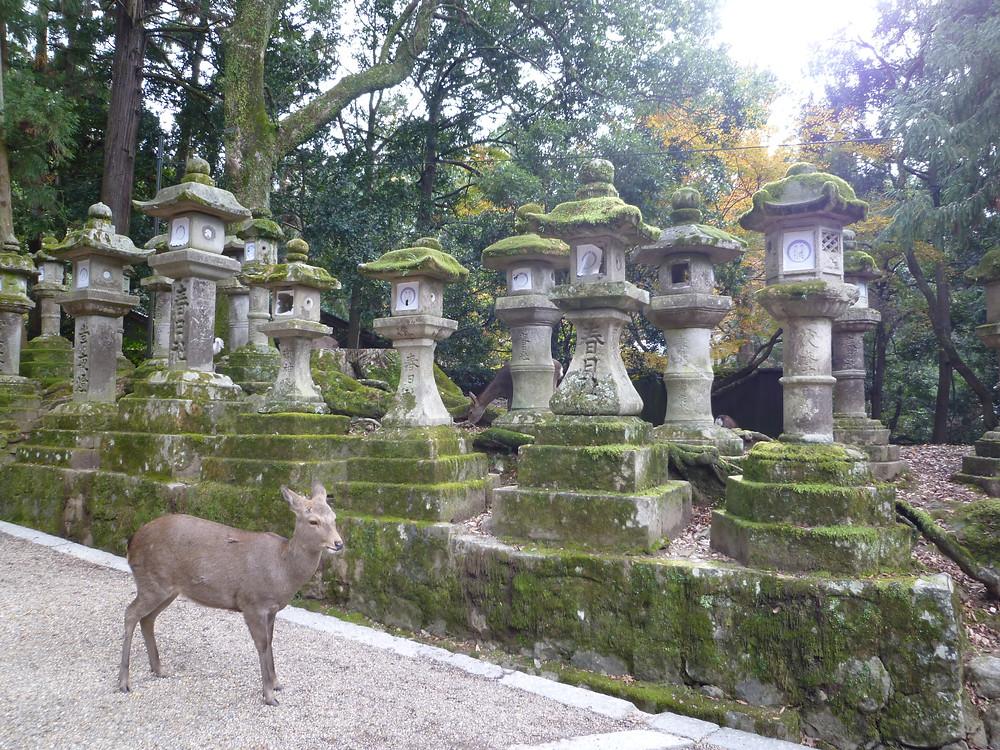 Stone lanterns with deer at Kasuga taisha Shrine