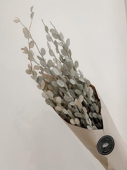 Getrocknetes Silberblatt | Natur