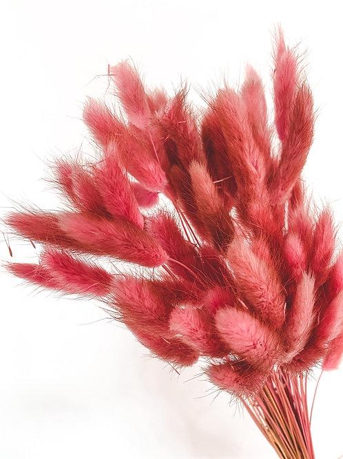 Lagurus   Berry Pink