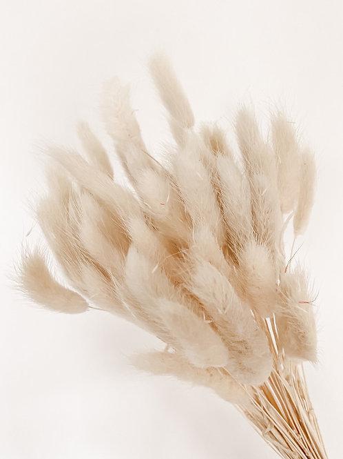 Lagurus | Weiß