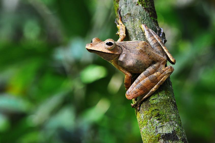W Tree Frog DSC_5792.JPG
