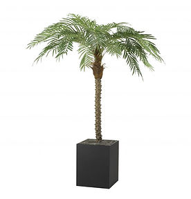 paltre_palmtree_6ft.jpg