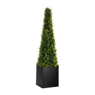 Cone Boxwood Topiary 6'