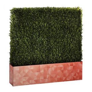 Boxwood Hedge 4' Logo
