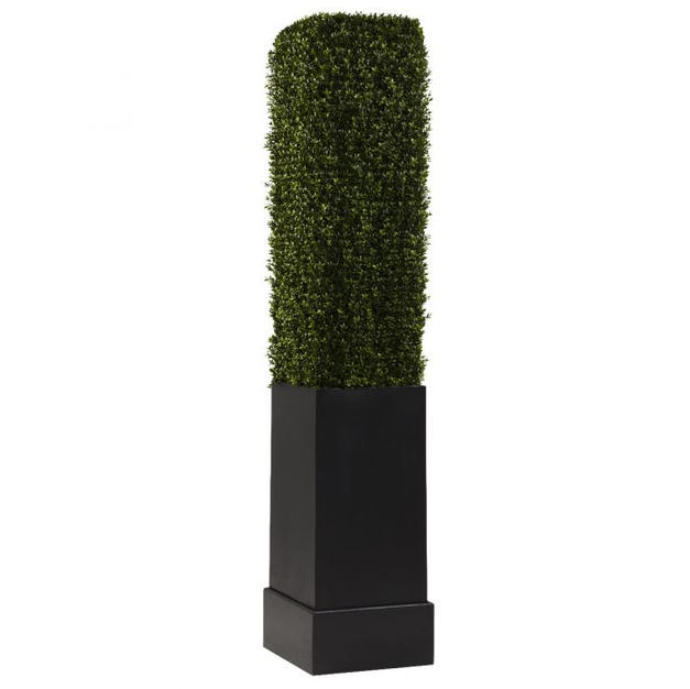 Boxwood Column 7'
