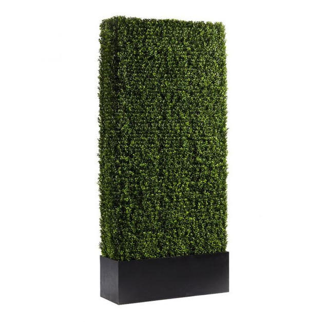 Boxwood Hedge 7'