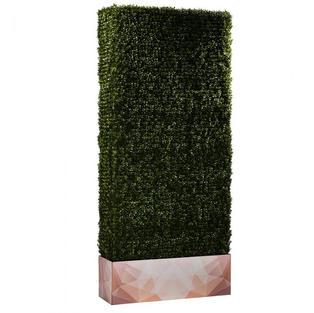 Boxwood Hedge 7' Logo