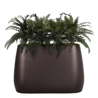Planter Divider with Ferns