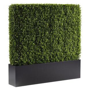 Boxwood Hedge 4'