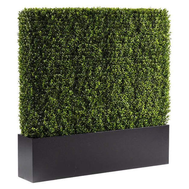 Boxwood Hedge 4'