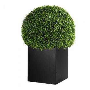 Boxwood Ball Topiary