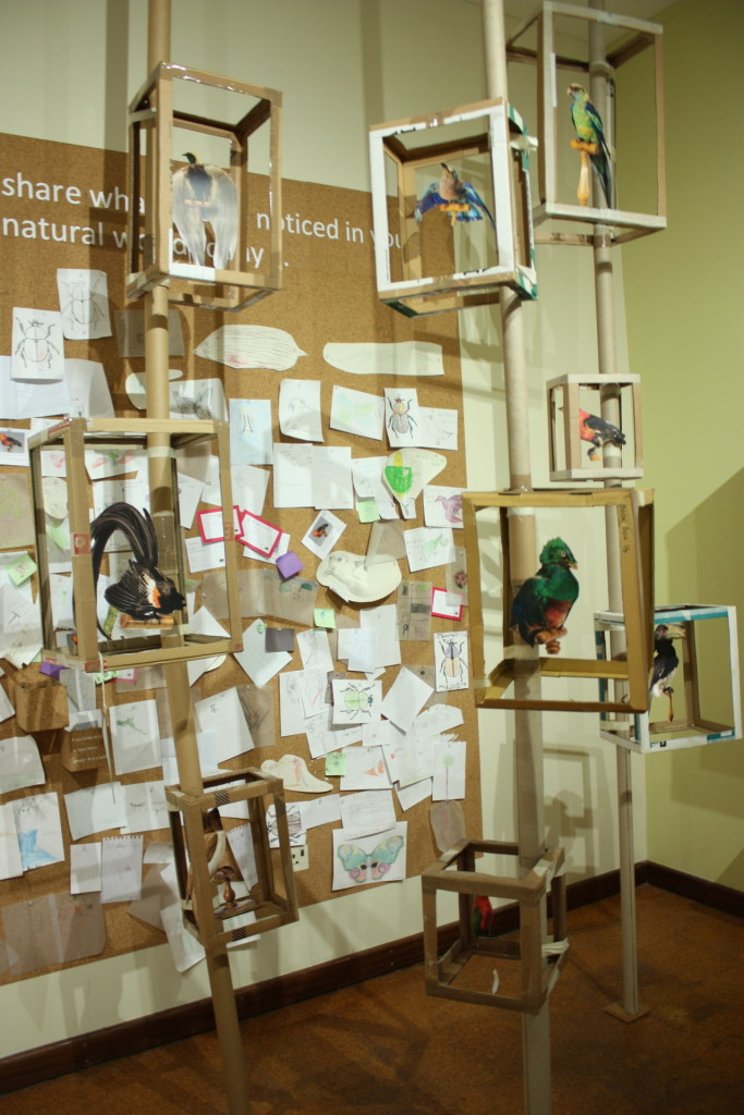 Notice Nature Feel Joy Gallery al Derby Museum durante la co-creazione con il pubblico. Fonte: https://dmnature.tumblr.com