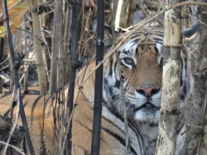 Travelogue: Tiger Safari