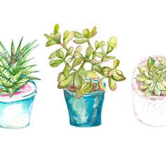 Houseplant Illustration