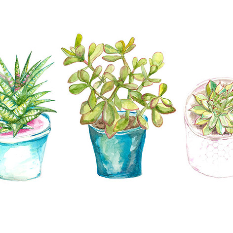 Houseplant Illustration