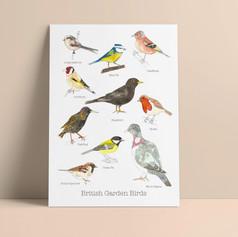 British Garden Birds Print