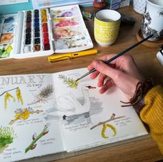 Nature Journal Illustration