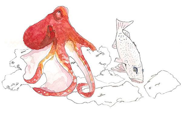 reef octopus & grouper