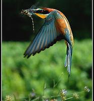 bird+dragon+fly.jpg