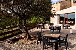 Comer y beber en la terraza bajo los olivos