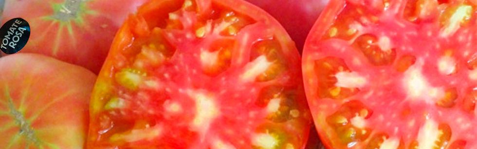 tomate-980x306.jpg