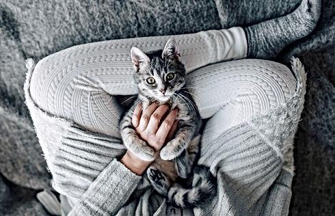 Stocksy-Kitten-snuggle-Melanie-DeFazio.jpg