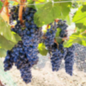 #Malbec we are coming for you, you beaut