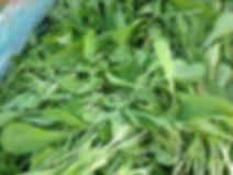 arugula.jpg