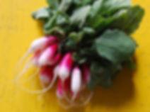 breakfast radish.jpg