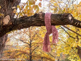 La noche de las bufandas ...
