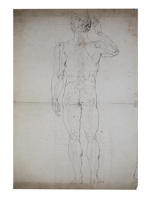 French Antique Anatomy drawing 19th on vellum paper